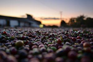 Découvrez l'actualité du torréfacteur l'Artisanes thés cafés